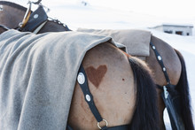 A Heart Shape On The Back Of The Horse