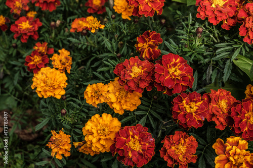 Herbstblumen Im Garten Buy This Stock Photo And Explore