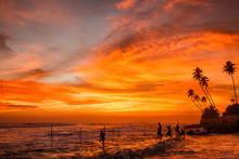 Sunset Stilt Fishing, Sri Lanka