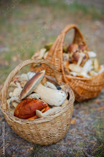 Baskets full of various kinds of mushrooms in a forest Wallpaper Mural