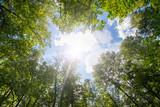 Fototapeta Fototapety na ścianę - Green forest. Sun light through treetops.