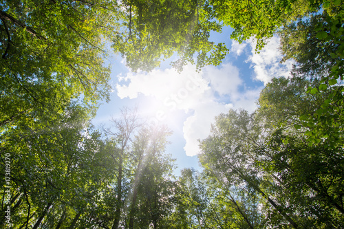 Fotografie, Obraz  Green forest. Sun light through treetops.