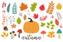 Set Of Isolated Autumn Plants - Vector Illustration, Eps