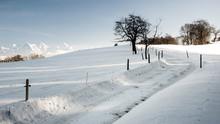 Winterlandschaft Mit Baum Und ...