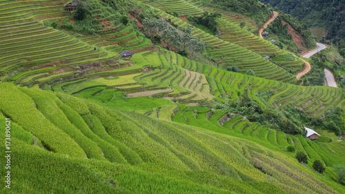 Poster Rijstvelden Rice fields in Vietnam.