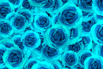 Fototapeta Róże Rose blue flower blossom background