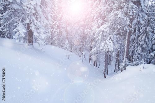 Fototapeta Winter mountain snowy forest obraz na płótnie