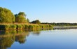 canvas print picture - A distant flock of ducks on a calm lake with canes and forest on the shore on a clear sunny day