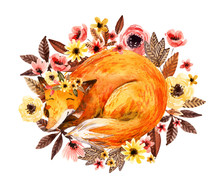 Watercolor Sleeping Fox Among Flowers Isolated On White Background.