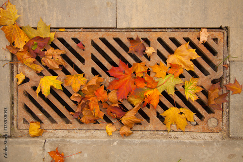 autumn cleaning in the park Canvas Print