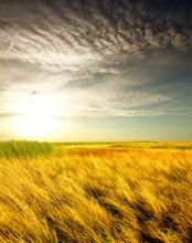 Long Summer Dry Grass Against A Sunset
