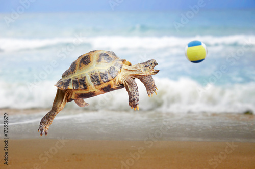 Turtle jumps and catches the ball