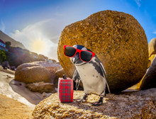 African Penguin With Sunglasse...