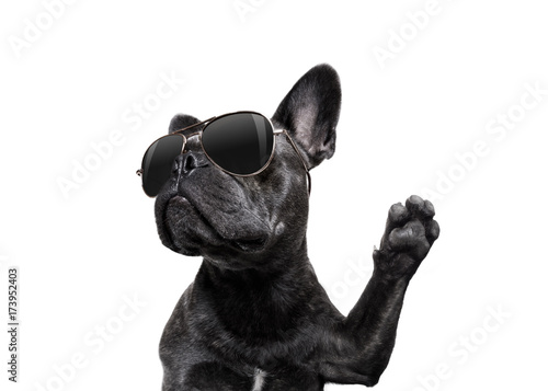 Aluminium Prints Crazy dog posing dog with sunglasses high five
