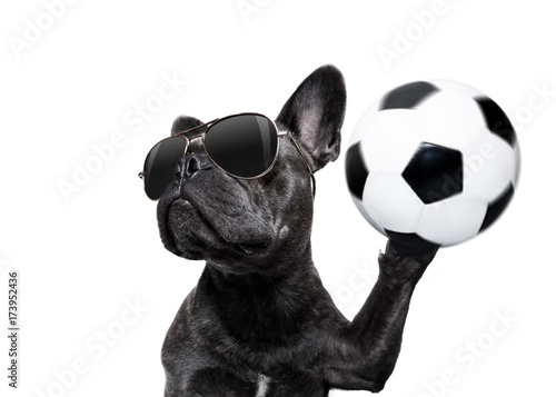 Deurstickers Crazy dog soccer player dog