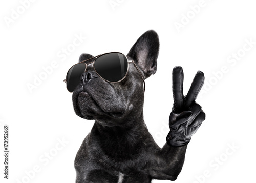 Foto posing dog with sunglasses and peace fingers