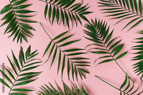 Fotomural green leaves of palm tree