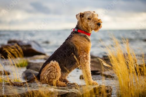 Photo Sitting dog