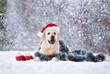 canvas print picture happy labrador dog posing in a Santa hat in snow