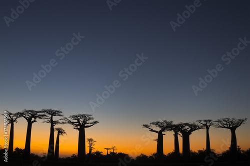 Keuken foto achterwand Baobab Baobab Baeume im Sonnenuntergang