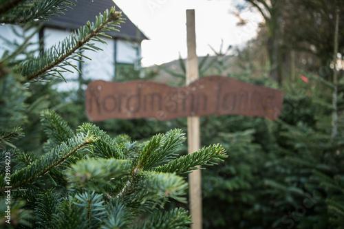 Nordmanntanne Weihnachtsbaum.Weihnachtsbaum Markt Zum Kauf Verkauf Nordmanntanne Blaufichte