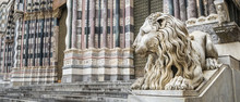 Stone Lion - Geova