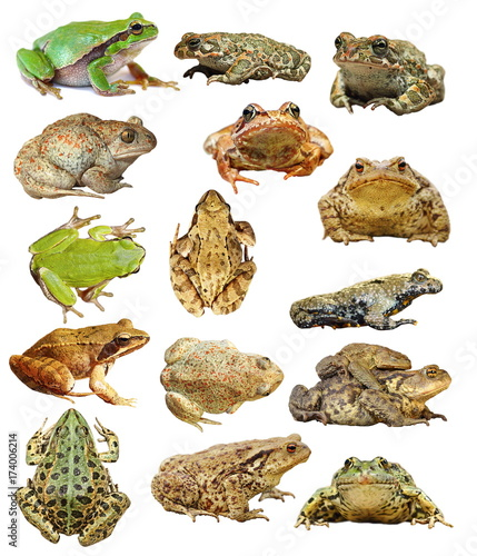 large collection of isolated frogs and toads Canvas Print