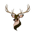 Head of a deer, cartoon on a white background.