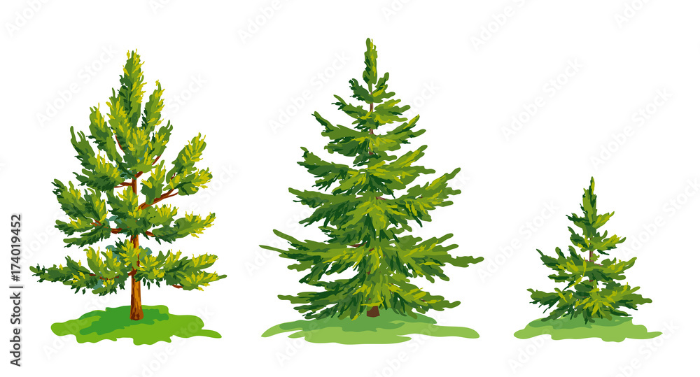 Fototapety, obrazy: Vector drawing of little pine tree and two fir trees