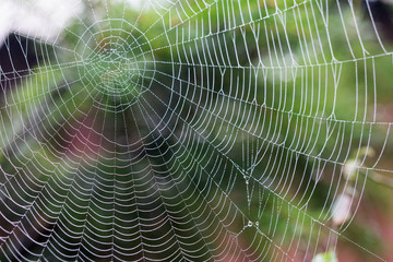 Beautiful pattern of spider's web with dewdrops on green background