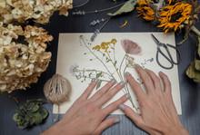 Girl Making Herbarium. Dried H...