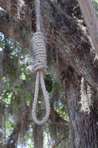 Fotografie, Obraz  Hangman's noose under a live oak tree