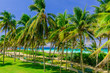 beautiful inviting nice tropical palm tree garden with turquoise tranquil ocean and white sand beach in background