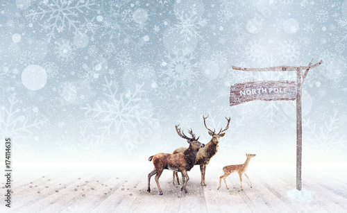 Deer arriving at the north pole 3D Rendering Wallpaper Mural