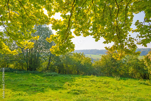 Staande foto Lente Panorama of a field on a hill in sunlight at fall