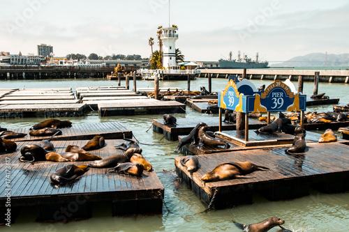 Fototapeta premium leniwe lwy morskie w san francisco pier 39, kalifornia