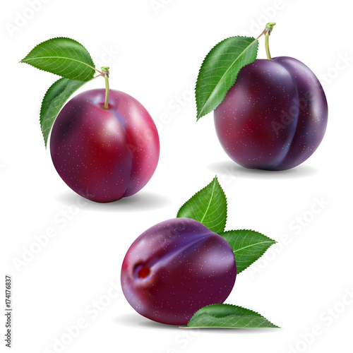 Fotografia Quality realistic vector plum collection