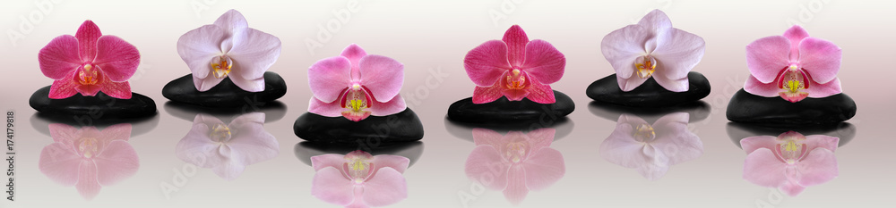 Orchid on the rocks