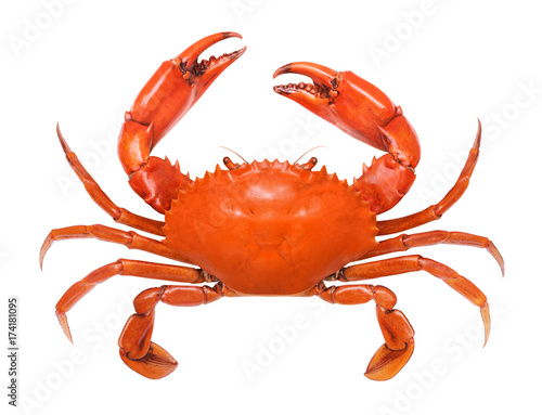Photo  Crab isolated on white background.