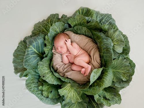 A newborn baby lies in a cabbage