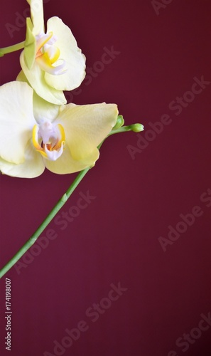 Fototapeta Storczyki,Orchidea obraz