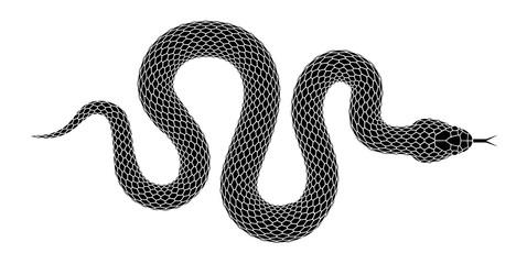 Vector silueta zmije izolirane na bijeloj pozadini.