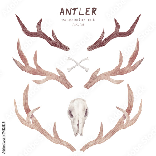 Fotografie, Obraz  Watercolor antler collection