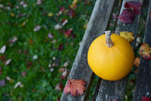 Yellow Gourd On Bench, Above Lawn Covered With Leaves