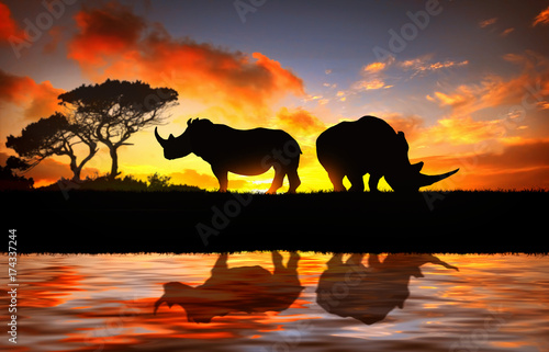 La pose en embrasure Rhino Rhino at sunset