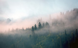 Fototapeta Landscape - morning mist in mountain forest