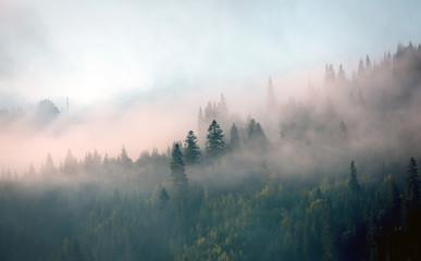 poranna mgła w górskim lesie