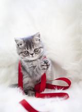 Kitten And Ribbon