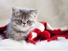 Kitten And Christmas Stocking