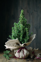 Christmas Tree Wrapped In Burlap